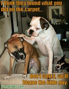 funny-dog-dont-worry1